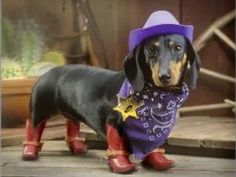 Doxie love sheriff