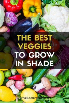 The Top 10 shade loving vegetables to plant in your home garden. These vegetables love growing in shade. We explain to you how to grow these shade-loving plants, all vegetables in your home garden. A lot of gardeners do not get sunlight in their garden so our hope is to encourage all such gardeners on how to grow these shade-loving vegetables in their garden, to add more harvests to their gardening journey. #urbakigardening #gardening #vegetables #bestveggiesgrowshade #growshade #veggies