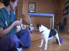Dog counterconditioning is a behavior modification technique that goes to the root of your dog's problem by changing your dog's underlying emotional responses. Stop Puppy From Biting, Puppy Biting, Aggressive Dog, Dog Agility, Jack Russell Terrier, Dog Behavior, Dog Training Tips, Dog Care, Pet Dogs