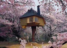 casas em árvores