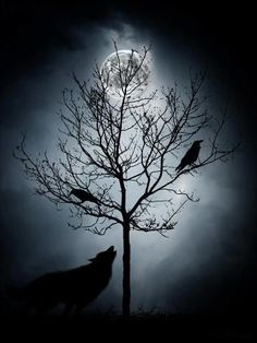 Image result for raven and wolf tattoo designs