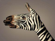 A mão forma uma zebra algo surreal