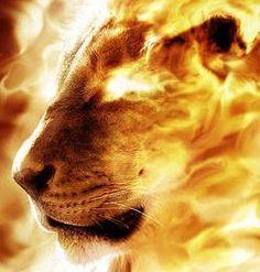Aslan/Lion of the Tribe of Judah Fire Lion, Tribe Of Judah, Prophetic Art, Leo Lion, Animation, King Of Kings, Lion Kings, Photo Manipulation, Big Cats