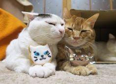 ⇑テマリカンボク の画像|のせ猫オフィシャルブログ Powered by Ameba
