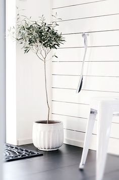 Olive tree in living room - Design