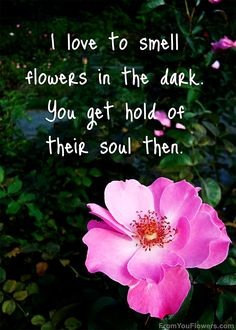 Flower Love Quotes Enchanting Quotesmatisse  Google Search  Bulletin Boards  Pinterest