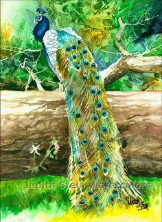 PEACOCK Zoo Bird 11x15 Signed Watercolor Giclee Art Print. $40.00, via Etsy.