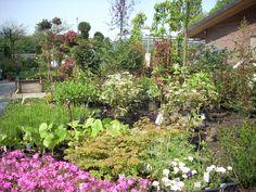 """planten van bomerie """"de sluispolder"""" op locatie Sluistuinen in Alkmaar."""