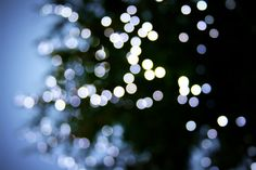 Margaret Jones' christmas tree bokeh makes me smile