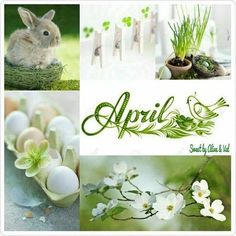 E-mail - Hubertina Simons - Outlook Seasons Months, Months In A Year, Four Seasons, Collages, Neuer Monat, April April, Pot Pourri, Shabby Chic Flowers, Beautiful Collage