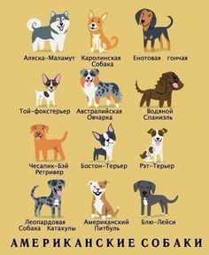 Американские собаки
