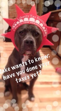 Jake is very concerned with your procrastination this tax season!