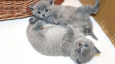 Playing With ADORABLE Kittens