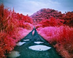 Richard Mosse, Before the Flood, 2015