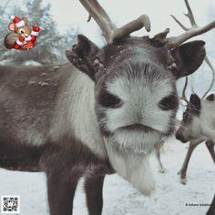Bald ist Weihnachten! Besuche Schwedisch Lappland über die Festtage...mit FlyCar! der Direktflug aus Deutschland.