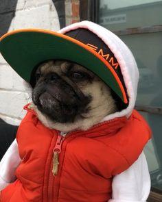 """Biggie Notorious P.U.G. auf Instagram: """"On my way to vote. TAKI TAKI VOTE VOTE ❤️ @Elitemktg #AuraUSAtour2018 . . . . @ozuna #emm #music #puglife #pugsofinstagram @cardib…"""""""