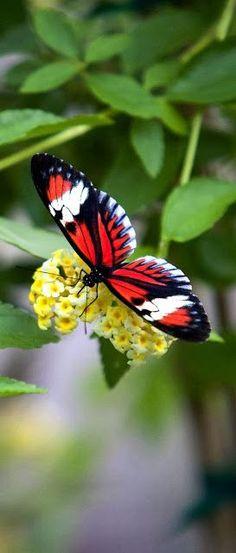 Stunning Butterfly!!
