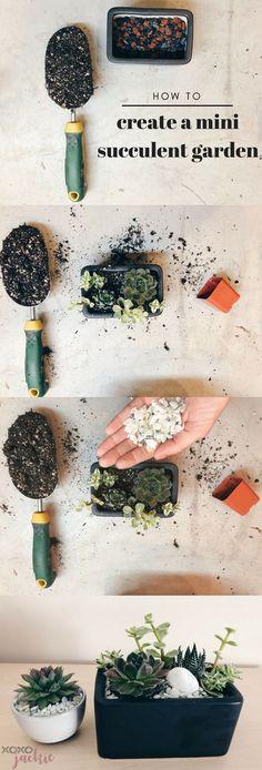 How to create a mini succulent garden