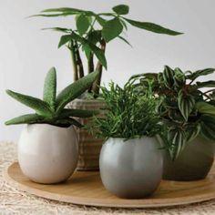 Grønne planter placeret funktionelt og tidsløst i keramikpotter. Se mere på bloggen   www.blomstermix.dk