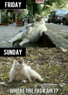 Funny quote / cat - Friday/Sunday