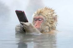 40 superbes photos issues des vainqueurs du Wildlife Photographer of the Year 2014