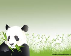 Panda PowerPoint template is a free Panda background for PowerPoint that you can use to create amazing PowerPoint presentations for animals or animal planet related templates
