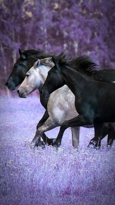 Love this picture Most Beautiful Horses, Pretty Horses, Horse Love, Andalusian Horse, Friesian Horse, Arabian Horses, Black Horses, Wild Horses, Horse Photos