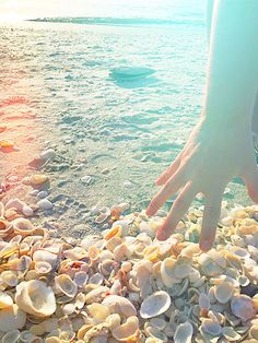 Best Shell Hunting on Sanibel Island Florida