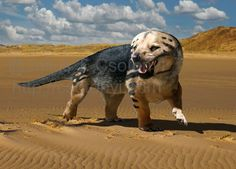 Cynodont | Cynognathus crateronotus. A large carnivorous cynodont therapsid that ...