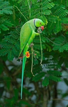 Cute Birds, Pretty Birds, Beautiful Birds, Animals Beautiful, Tropical Birds, Exotic Birds, Colorful Birds, Tropical Fruits, Vogel Gif