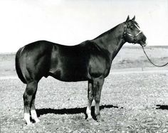 Two Eyed Jack (Two D Two x Triangle Tookie) 1961 Sorrel AQHA Stallion Undefeated at halter as a yearling - 7 Grand Champion Titles 7 Grand Champion Titles as a Two Year Old Inducted into the AQHA Hall of Fame in 1996 Quarter Horses, American Quarter Horse, All The Pretty Horses, Beautiful Horses, Animals Beautiful, My Horse, Horse Love, Horse Tips, Cutting Horses