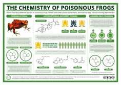 Compound Interest -   The chemistry of poisonous frogs, and how they avoid poisoning themselves