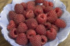 33 best fruits for wisconsin and the midwest images on pinterest fruit trees fruit and garden for Stein s garden home green bay wi