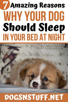 Here are the top benefits of letting your dog sleep with you in the night! Wild Animals Pictures, Pet Fox, Dog Rules, Dog Hacks, Sleeping Dogs, Dog Behavior, Training Your Dog, Dog Grooming, Dog Owners