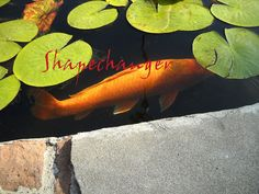 Beneath the Surface of the Pond5 x 7 PRINT by kohaku16 on Etsy, $15.00