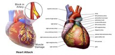 There are 6 unusual signs indicating the possible occurrence of heart disease. It is important to know what you should do if you notice any of them.