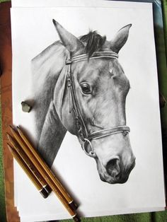 Figure horse mare named specifically Planta, by me :) #animals #drawing #horse #pencil #horses #pencil drawing #drawings #photo