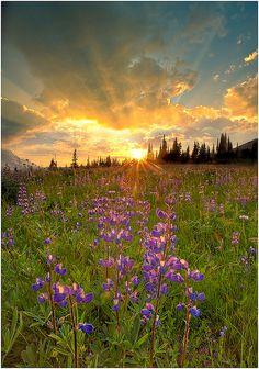 Sunburst On Mount Rainer by kevin mcneal, via Flickr