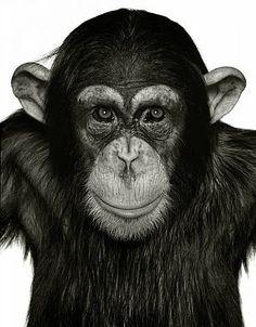 Albert Watson – MonkeySeries