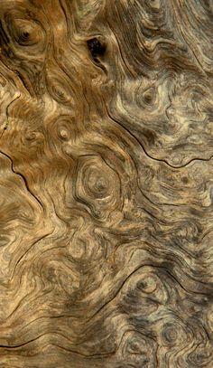 Beautiful burled wood...
