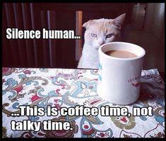 gatinho e café... a combinação perfeita