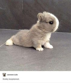 whatever this thing is, it's adorable!!