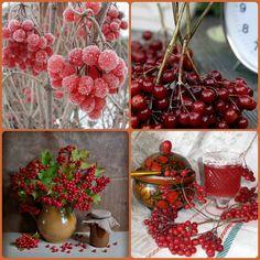 Калина - наша ненька Україна Стоїть над водою червона калина... Віками про неї складають пісні, - Це образ твій світлий, моя Україно, Він чистий і ніжний, як цвіт навесні.