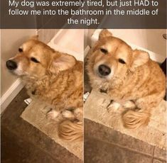 dogs dog memes funny memes Memes - 6075653 Dog Memes Are The Best Way To Put a Smile On Your Face - World's largest collection of cat memes and other animals Funny Dog Memes, Funny Animal Memes, Funny Animal Pictures, Cute Funny Animals, Cute Baby Animals, Funny Cute, Funny Dogs, Animals And Pets, Cat Memes