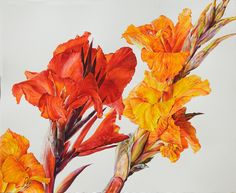 Red and yellow Cannas - Rosie Sanders