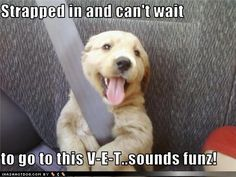 Google Image Result for http://2.bp.blogspot.com/-pyGcOQradhY/T9eGyfVp0GI/AAAAAAAArLE/cAMkD4Vw0YU/s1600/funny-dog-pictures-strapped-in-and-cant-wait-to-go-to-this-v-e-t-sounds-funz.jpg