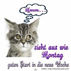 """McK Montag´s GB """"Katze"""" Animiert mit BBCode für Gästebucheinträge  wo ? auf der Homepage"""