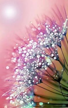 rainbow dandelion Art Print by Joke Vermeer Fotografia Macro, Alcohol Ink Painting, Alcohol Ink Art, Beautiful Images, Beautiful Flowers, Stunningly Beautiful, Foto Macro, Dandelion Art, Dandelion Wallpaper