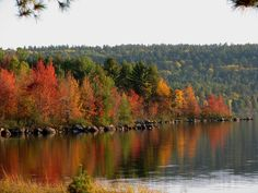 Home sweet Minnesota <3  Beautiful State Parks for camping and hiking..Winter enjoy snowmobiles and ski...