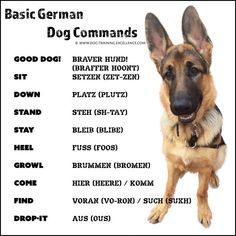 21 German Dog Commands to Train your Dog #doginfographic